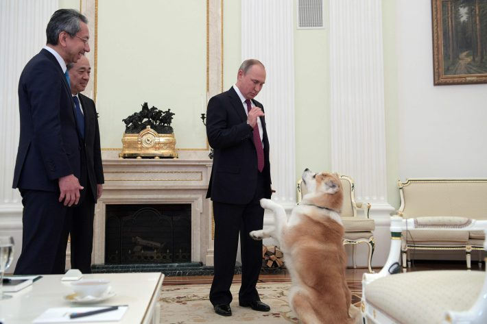 TOPSHOT - A picture taken on December 7, 2016 shows Russian President Vladimir Putin (R) as he plays with his Yume, an Akita dog prior to an interview with Nippon Television Network Corporation Executive Director Takayuki Kasuya (L) and Yomiuri Shimbun Editor in Chief Mizoguchi Takeshi in the run-up to his official visit to Japan. / AFP PHOTO / SPUTNIK / Alexey DRUZHININ